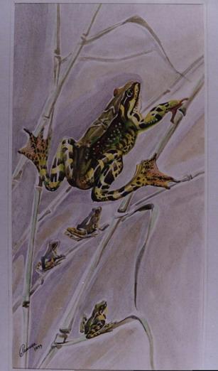 Лягушка на тростнике